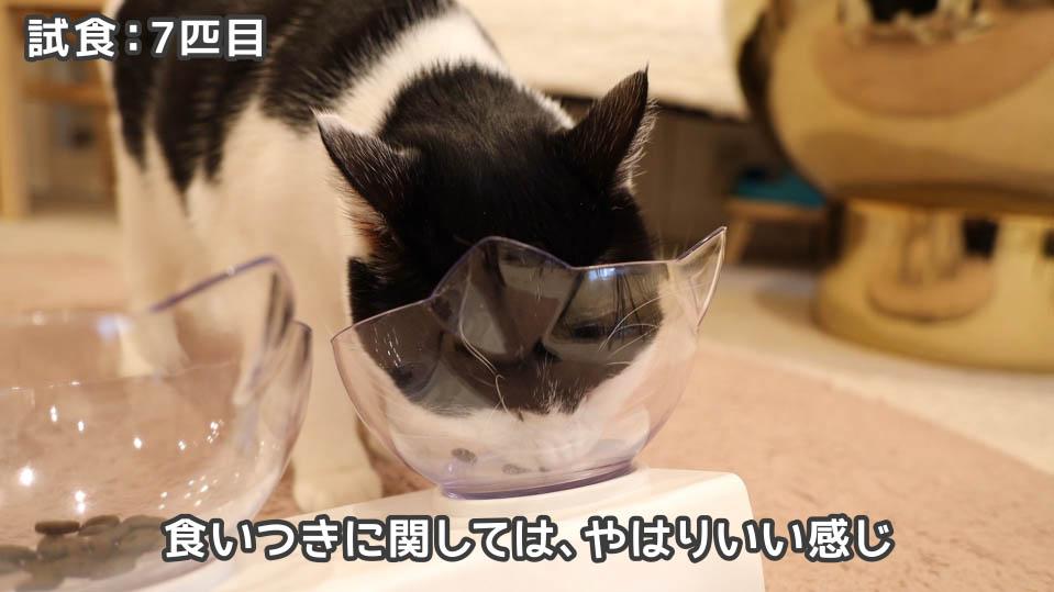 ジャガー・キャットフードを食べる7匹目の猫