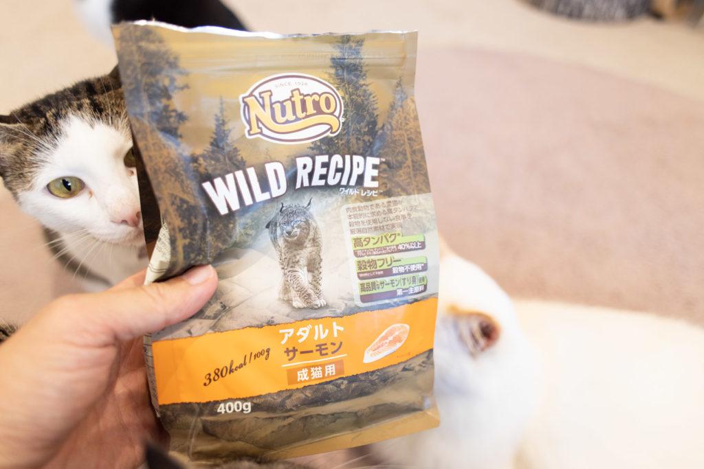 ニュートロ・ワイルドレシピを食べようとしてる猫