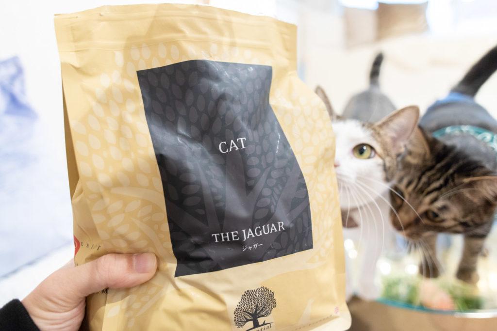 ジャガー・キャットフードに興味津々な猫たち