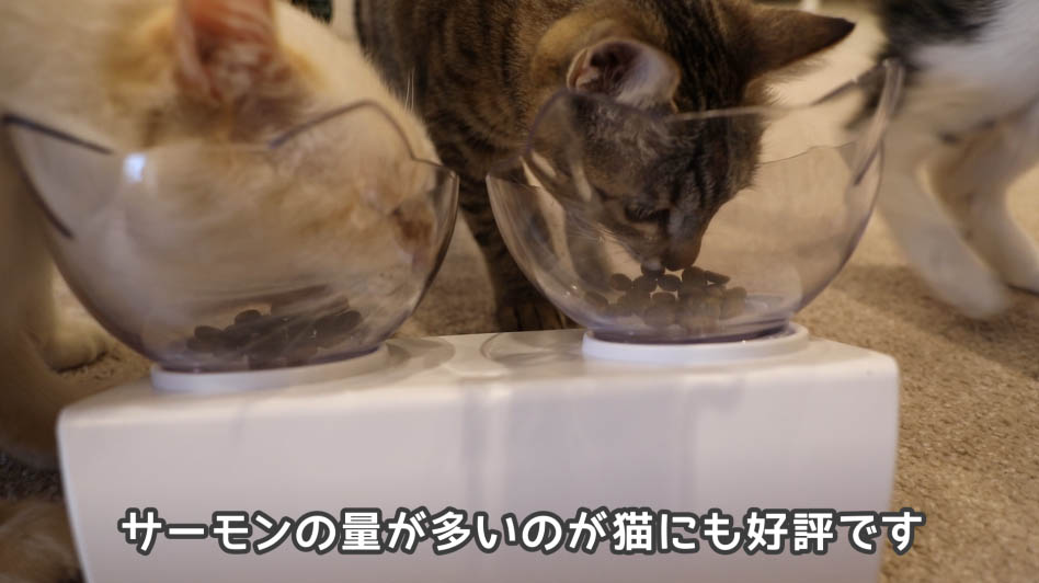 ニュートロ・ワイルドレシピ・キャットフードを猫たちが食べているところ