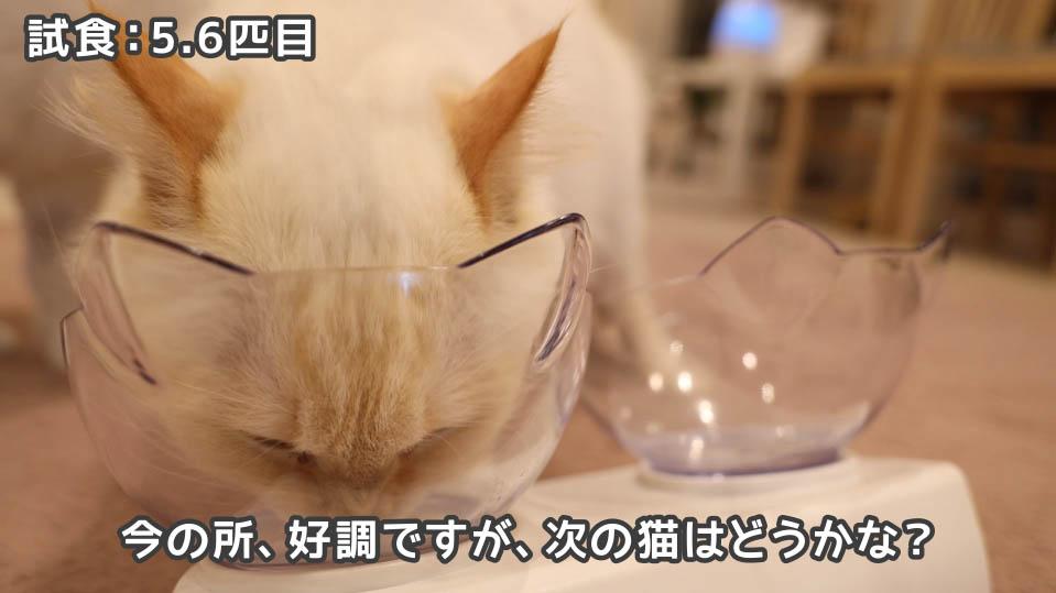 ジャガー・キャットフードを完食した5.6匹目の猫たち