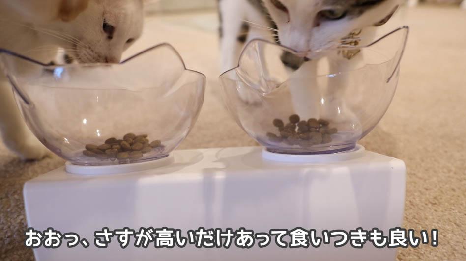 ニュートロ・ワイルドレシピ・キャットフードを猫たちが食べようとしているところ