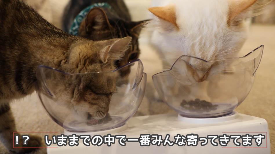 グランツ・キャットフードを食べる猫と見てる猫