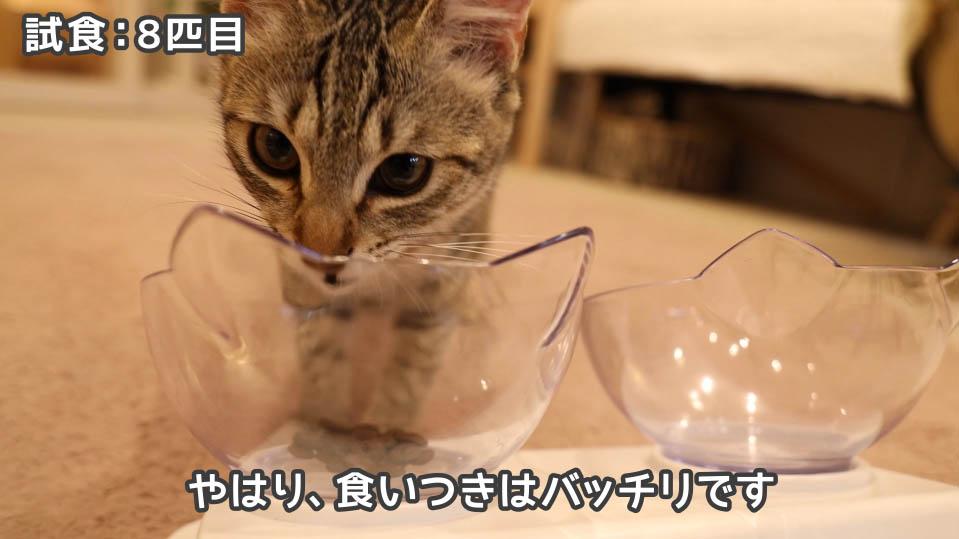 ジャガー・キャットフードを食べる8匹目の猫