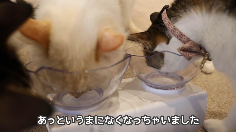 キャットフードを食べ終わった猫たち