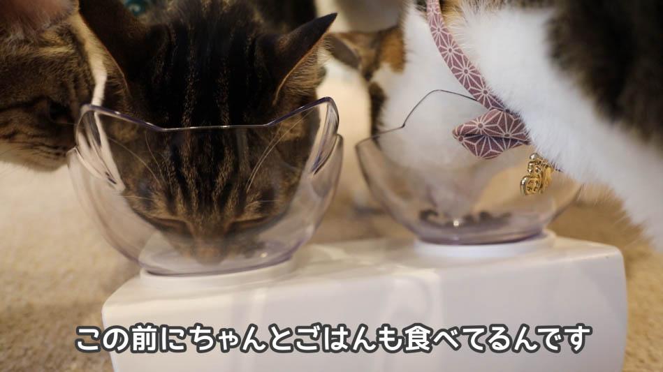 猫に好評なグランツ・キャットフード