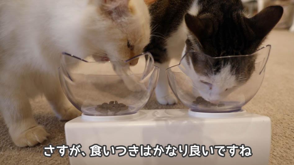 ニュートロ ナチュラルチョイスを食べる猫たち