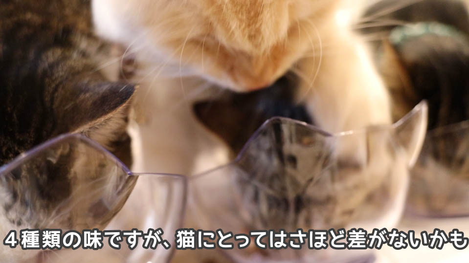 4種類の味は猫たちにとってそんなに違いがないかも