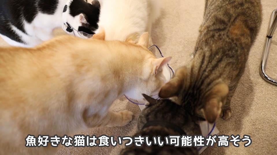 懐石zeppin5つのしあわせは魚好きな猫には良い感じ