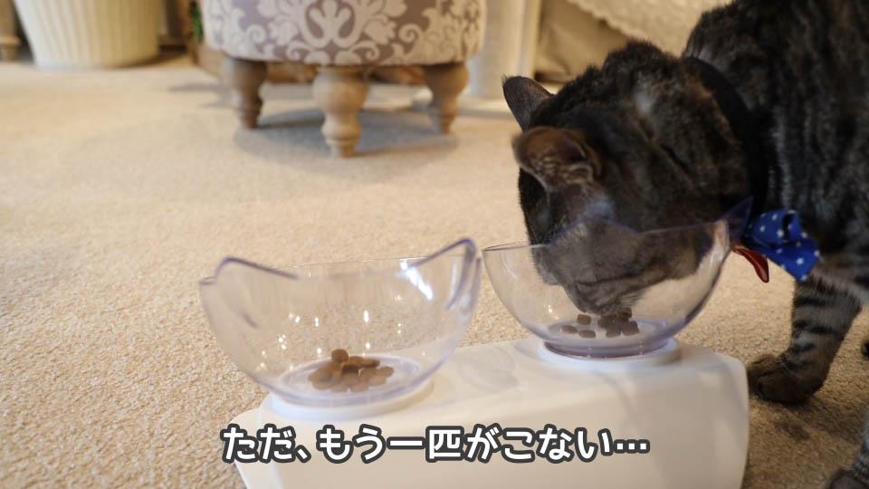 ロイヤルカナン プロテインエクシジェントを食べに来ない猫もいる