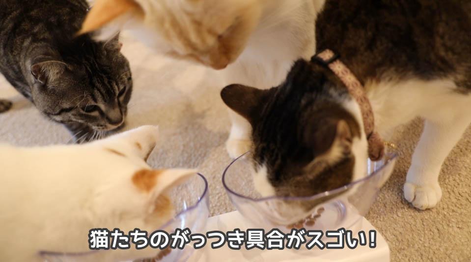 銀のスプーン三ツ星グルメ 下部尿路の健康維持を食べ始める猫たち