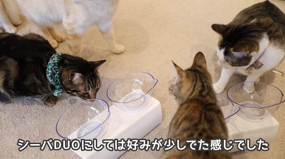 シーバDUO贅沢お魚味グルメセレクションを食べる猫たち7