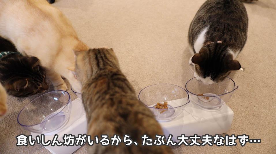 シーバDUO贅沢お魚味グルメセレクションを食べる猫たち2