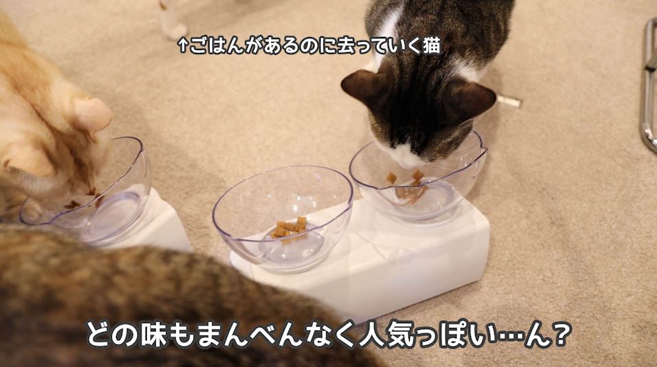 シーバDUO贅沢お魚味グルメセレクションには人気のない味がある