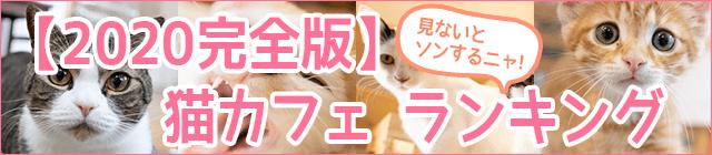 猫カフェのおすすめランキング