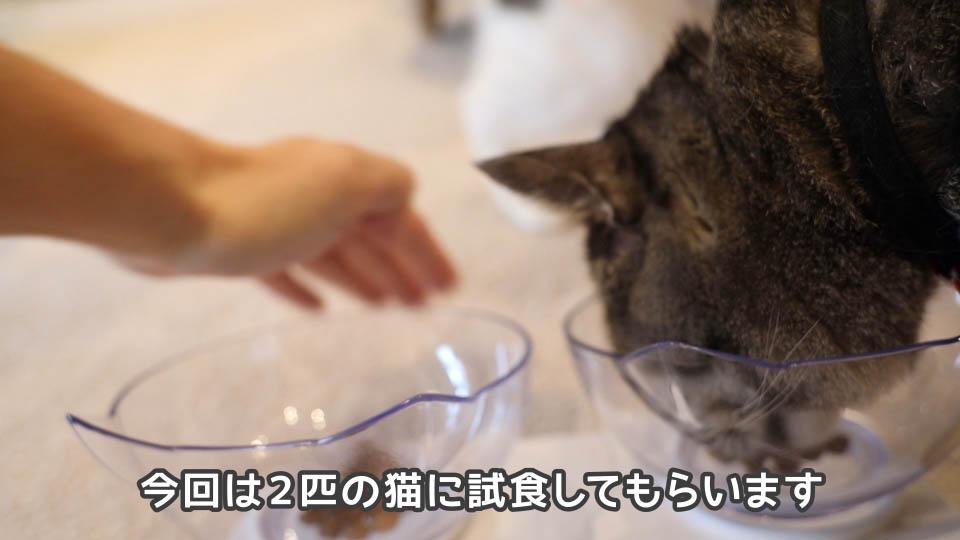 ロイヤルカナン プロテインエクシジェントを2匹の猫に試食してもらう