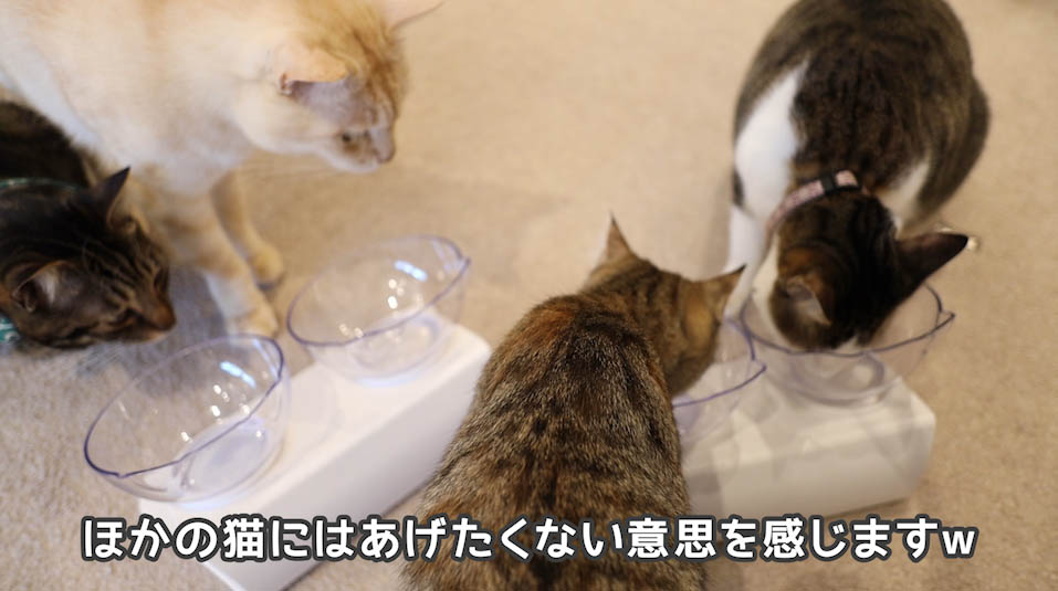 シーバDUO贅沢お魚味グルメセレクションを食べる猫たち6