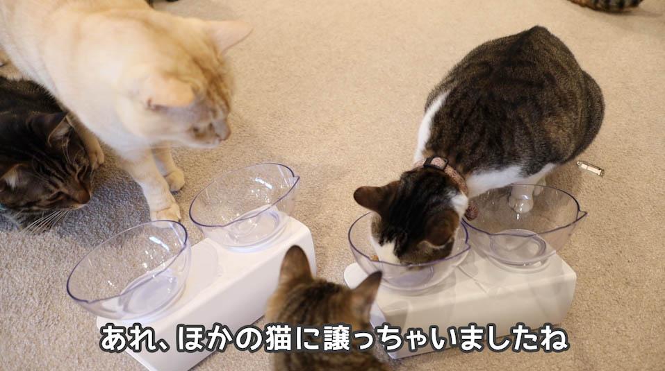 シーバDUO贅沢お魚味グルメセレクションを食べる猫たち4
