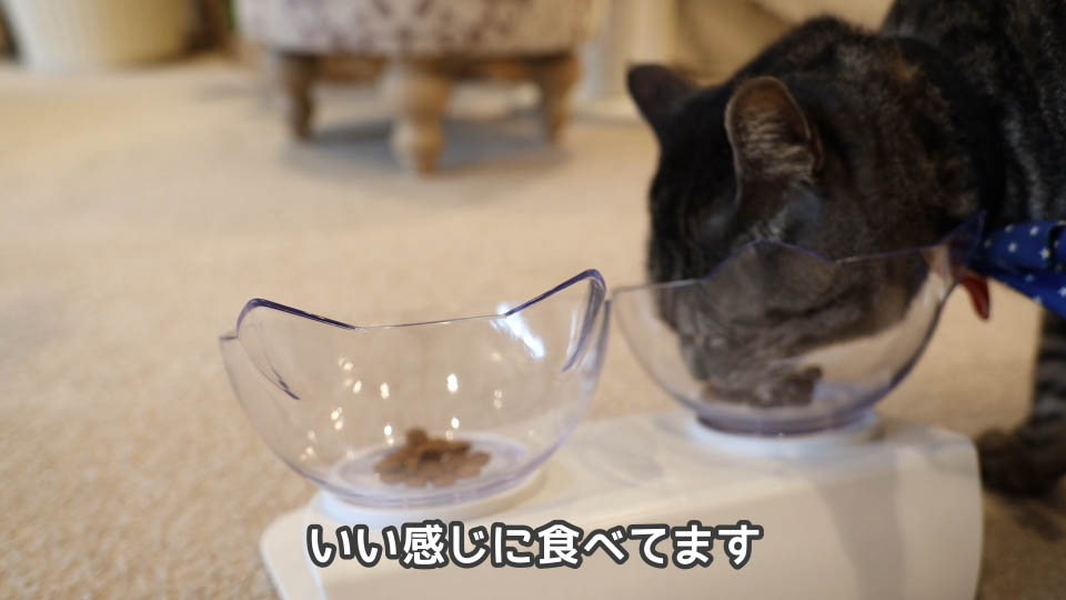 ロイヤルカナン プロテインエクシジェントを食べる猫