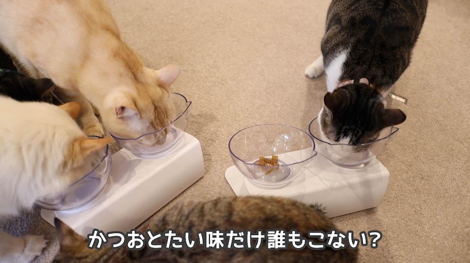シーバDUO贅沢お魚味グルメセレクションのかつおとたい味は人気がなかった