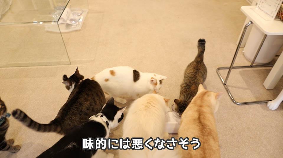 懐石zeppin5つのしあわせは猫たちの食いつきも良い
