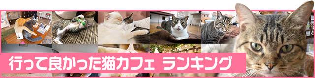 猫カフェランキング